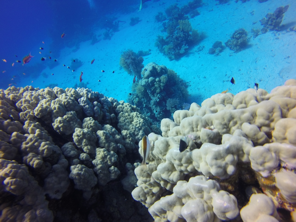 Top Dive Sites in Marsa Alam, by Packing my Suitcase