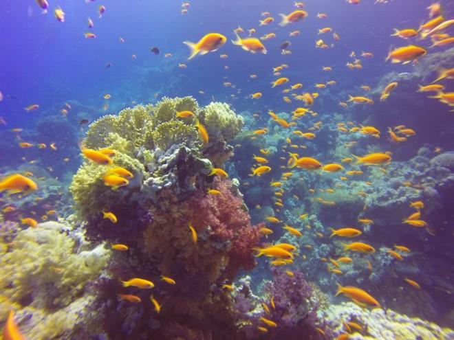Yolanda & Shark Reef