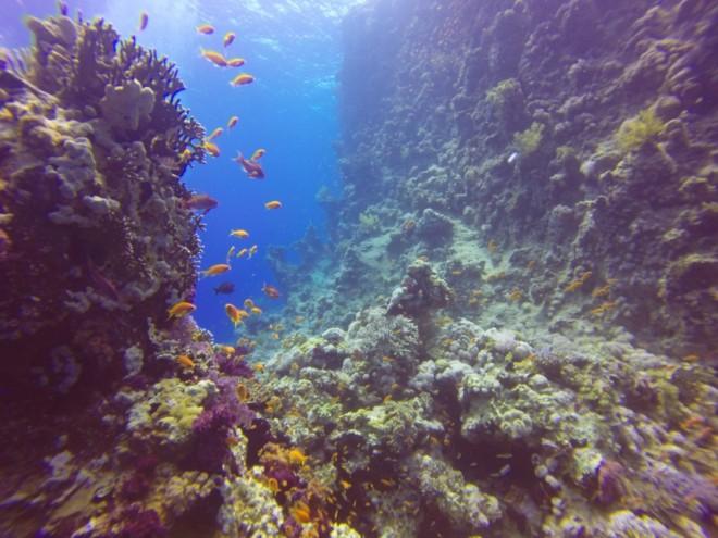 Dive site: Ras Za'adar