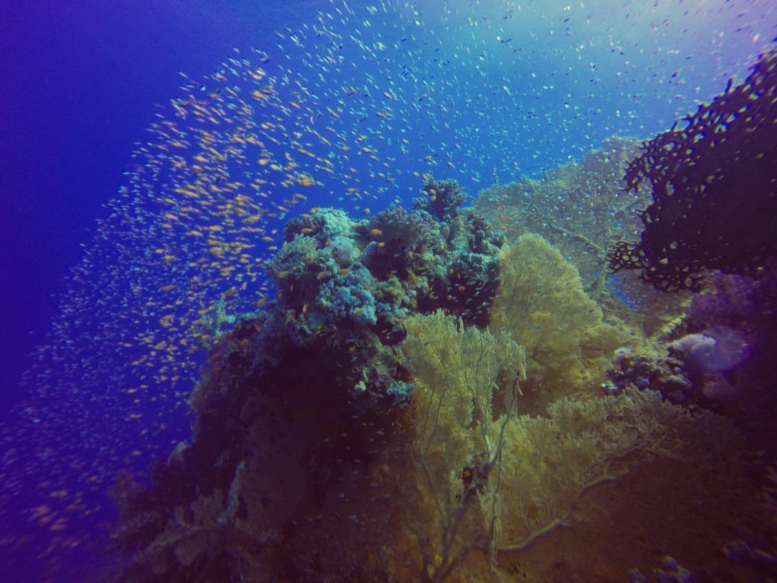 Dive site: Amphoras