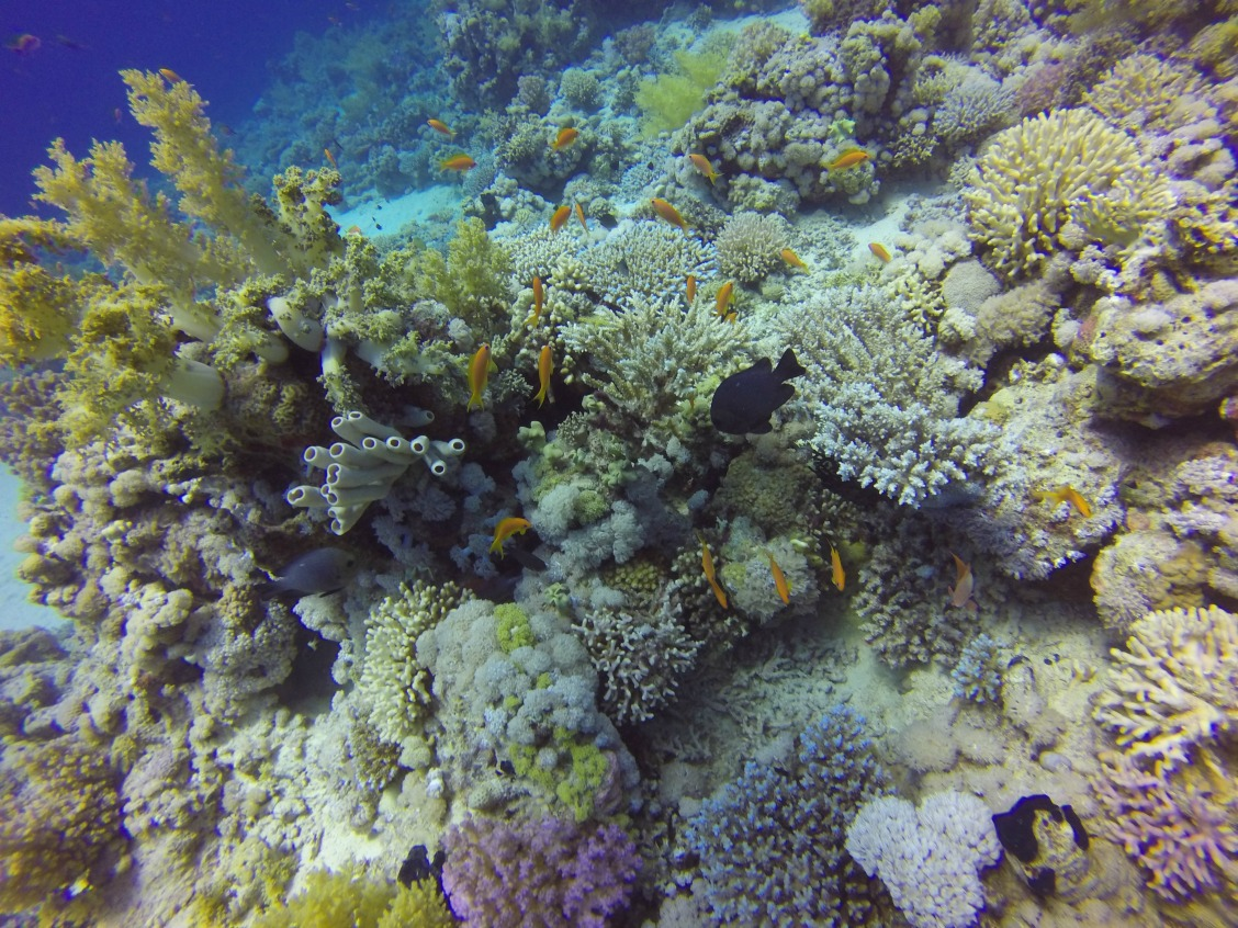 Gordon Reef, Tiran Island