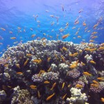 Diving in Sharm-El-Sheikh, Egypt