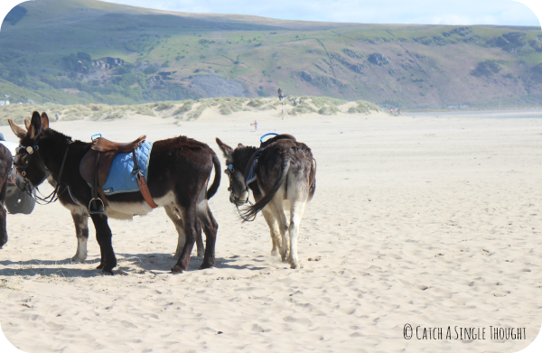 Donkeys at Barmouth
