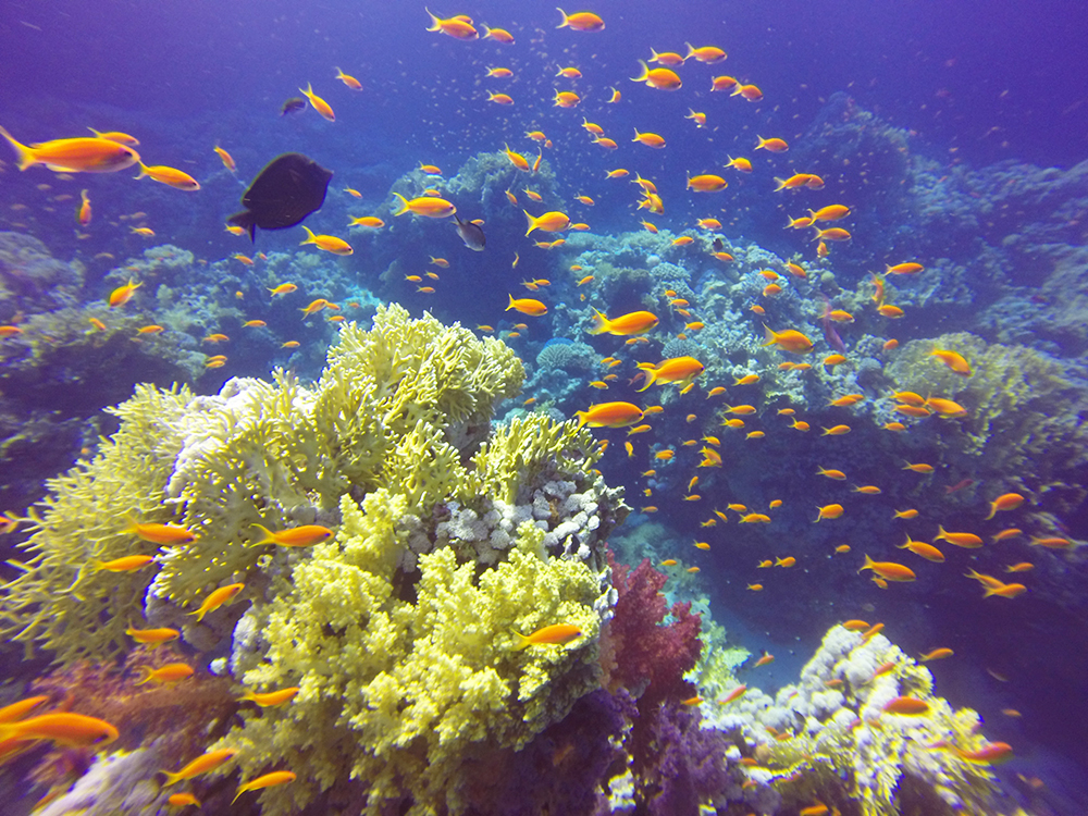 Diving in Marsa Alam x Sharm-El-Sheikh