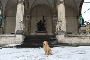 Munich with a dog