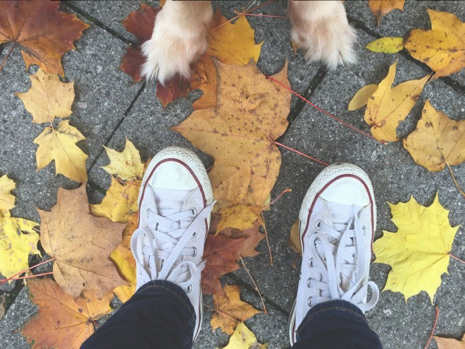 Shoes and dog