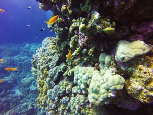 Diving in Hamata, Egypt
