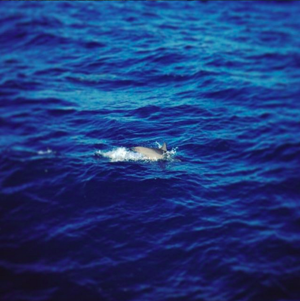 Dolphin in Egypt