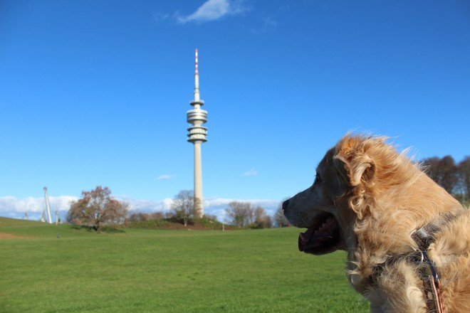 Dog in Germany