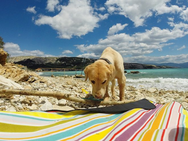 Croatia with a dog