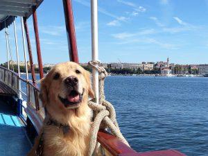 Croatia with a dog