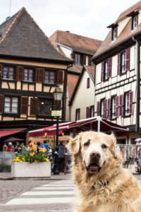 Dog in Obernai, Alsace