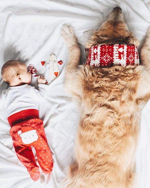 newborn and dog Christmas
