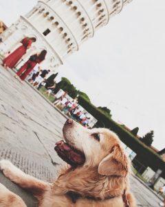 Dog in Pisa Italy