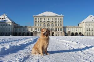 Munich with a dog