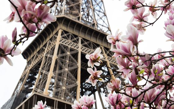 Eiffel Tower and magnolias, Paris
